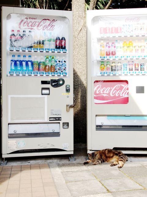 自動販売機と ネコ