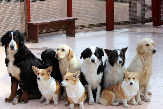 いろいろな 犬たち