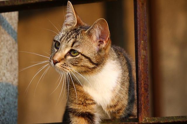 ネコ ネコ背