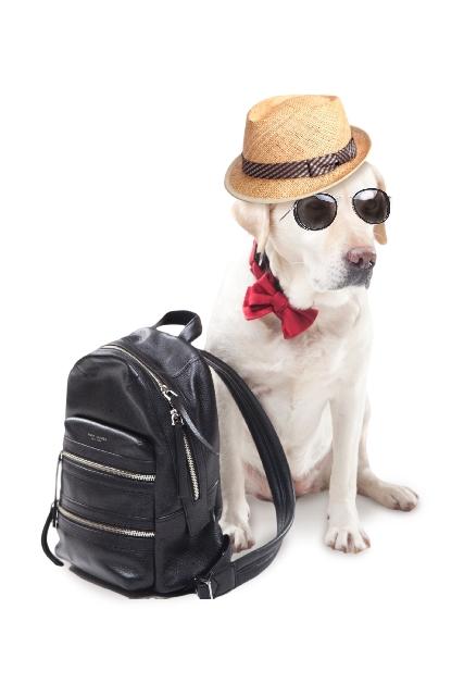 リュックサックと 犬