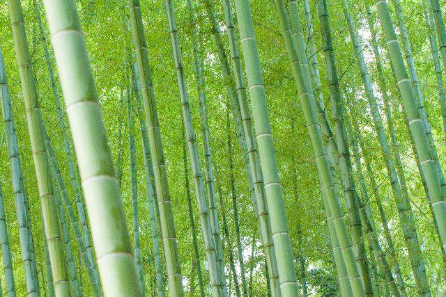 エジソン 竹
