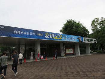 安田記念2016