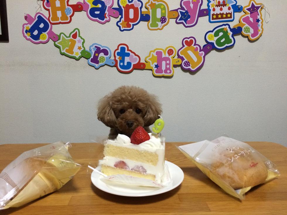 マロン9歳の誕生日
