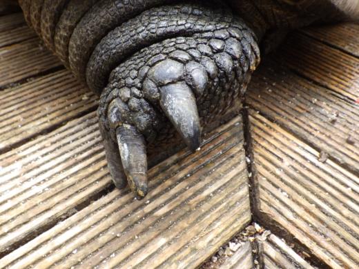 カメの爪 (5)