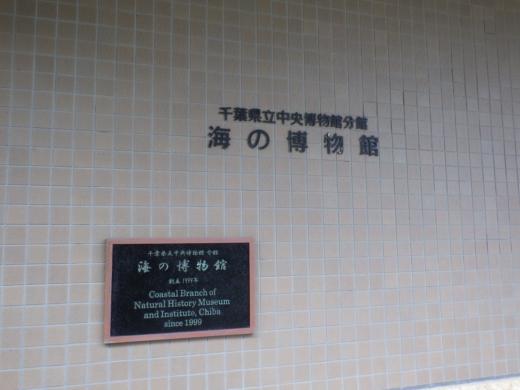 勝浦で磯遊び (20)