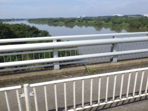 大利根橋で釣り (10)