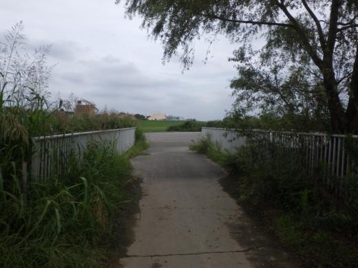大利根橋で釣り (14)