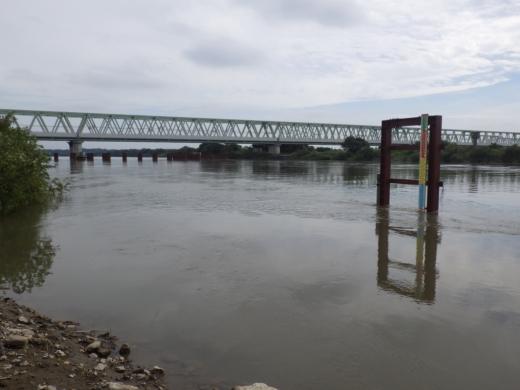 大利根橋で釣り (20)