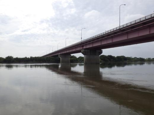 大利根橋で釣り (21)