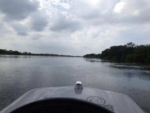大利根橋で釣り (43)
