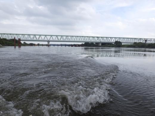 大利根橋で釣り (44)