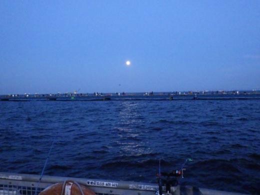 本牧海釣り施設 (17)