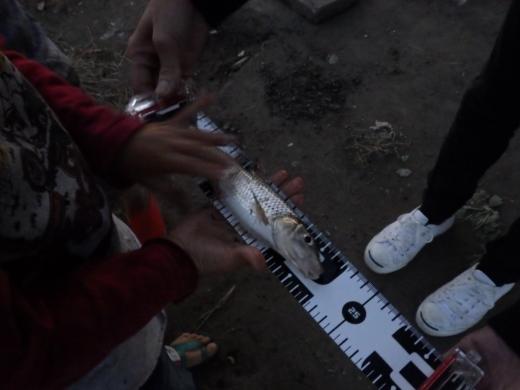中川の釣り (23)