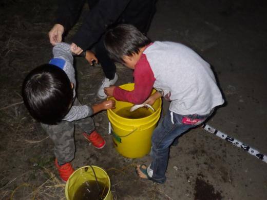 中川の釣り (24)