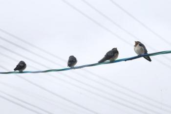 雨の中の小鳥たち2