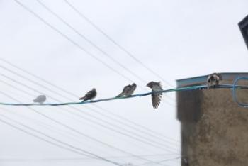 雨の中の小鳥たち