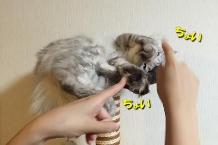 それが猫の4