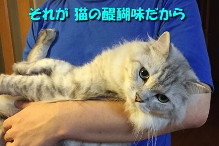 それが猫の11