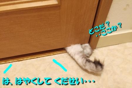 トイレ(1)12