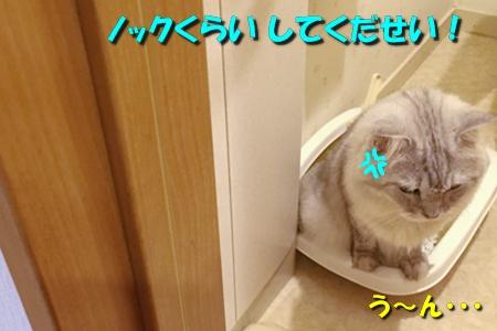 トイレ(2)5