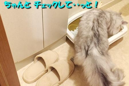 トイレ(2)7
