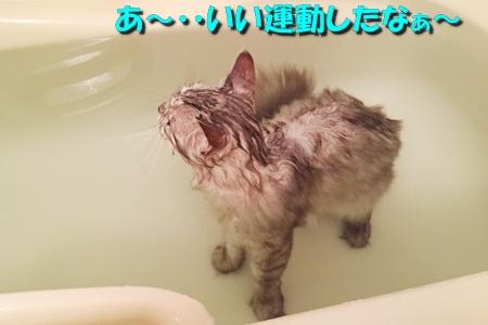 散歩の後はお風呂だね3
