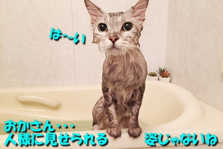 散歩の後はお風呂だね5