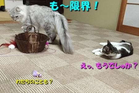 玉三郞とちび11