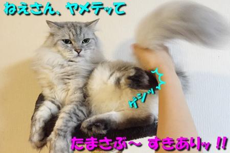 おねえが小話①2