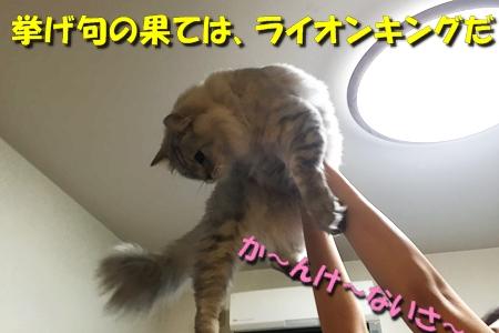 おねえが小話①5