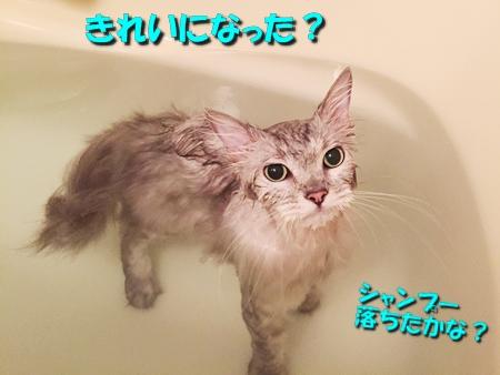 お風呂に入ってお出迎え準備5