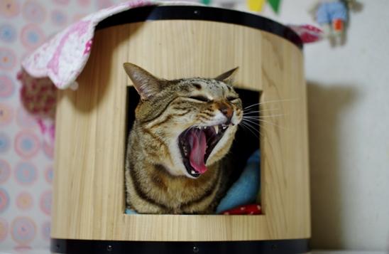 木樽ベッドにーsd0-あd-あださ