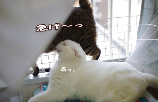 急げ^¥d-^¥あs-d^¥あsd^あsだsdさだsだsのコピー