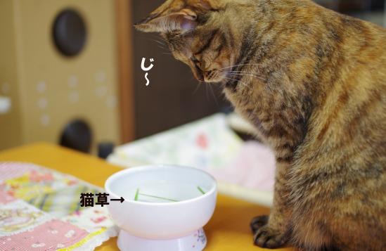 猫草^--^だs^dさだsddsのコピー