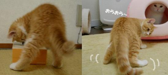 子猫時代のぷぷs^sss定 1のコピー