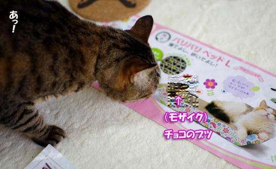 あっ!!!s^^¥さだsだのコピー