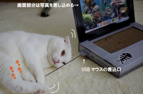 マウスが超お気に入りタマさん¥sdsのコピー