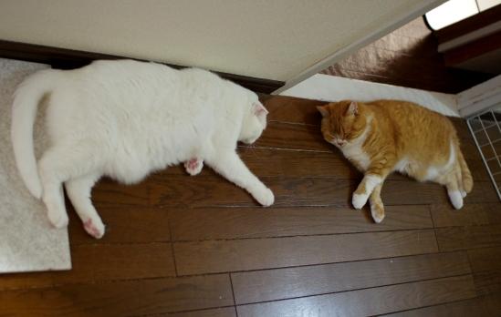 なんと廊下で仲良く寝てるsd-あだsd