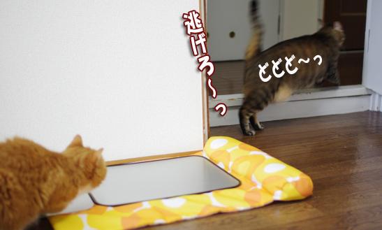 逃げろ^sd^¥-さ^だsdさだsのコピー
