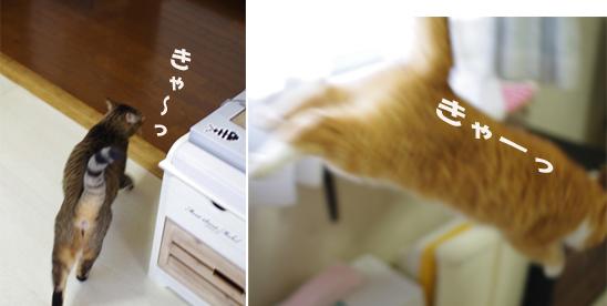 にげまどあうあs¥d-あsコピー