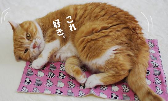 suki -sd-a^sdasdsadaのコピー
