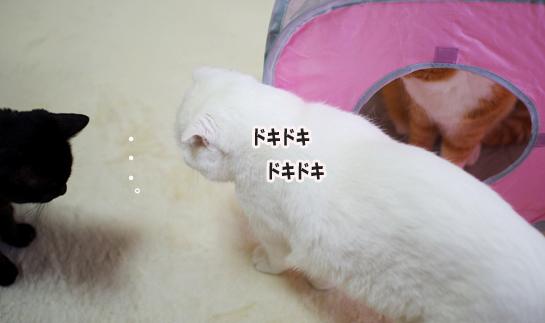 うわ~読会以降のコピー