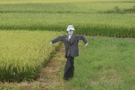 田んぼの中の案山子 [32591]
