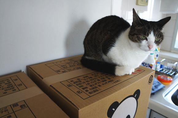 なに、まだ荷造り終わってないの?