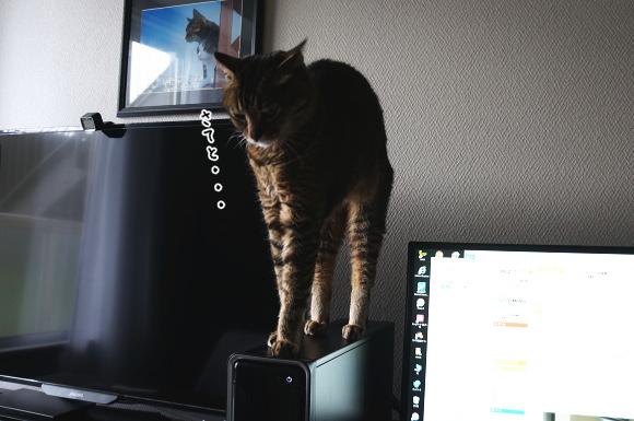 PCの上が好き