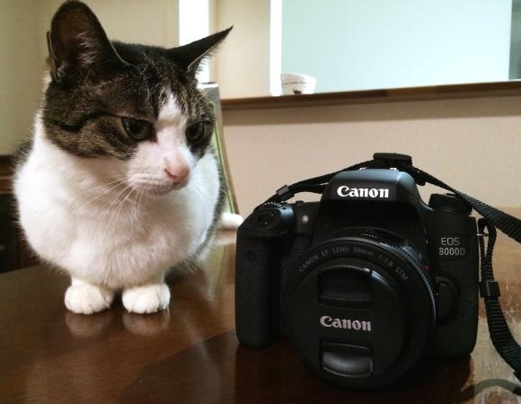 ふーん、カメラねぇ・・・