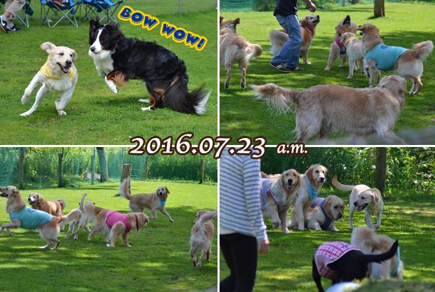 06_201607281404003ca.jpg