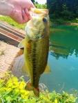 野池で釣れた40アップ