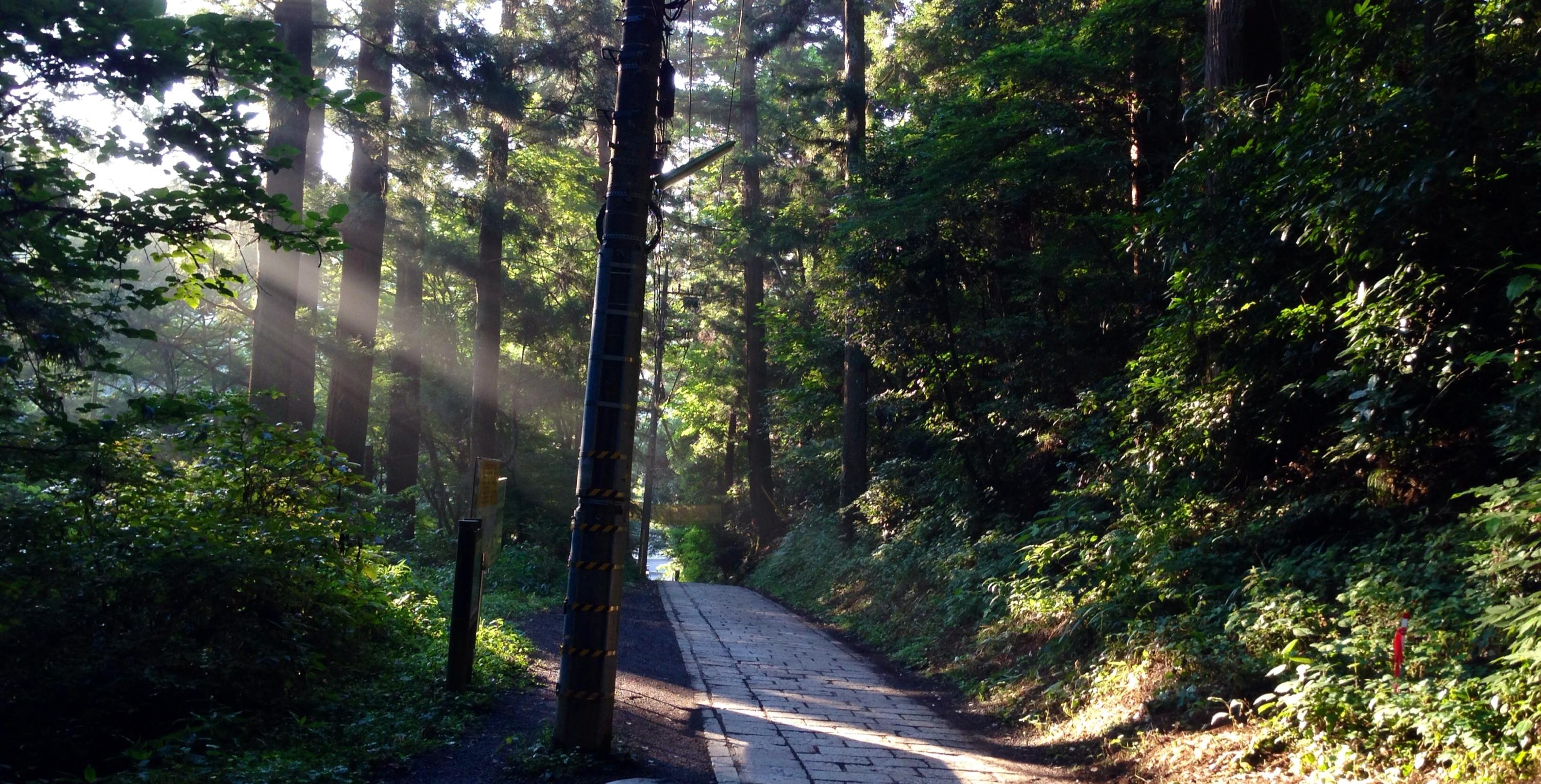 木漏れ日溢れる高尾山
