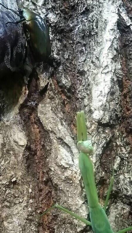 新宿区 バナナトラップ